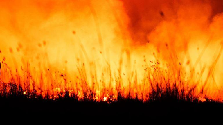 Disaster relief bushfires